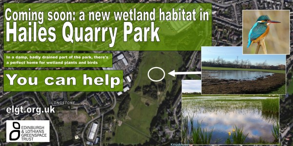 HQP wetland