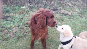 Dogs sniffing each other is a sign of social awareness