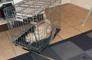 Use a crate to toilet train your puppy