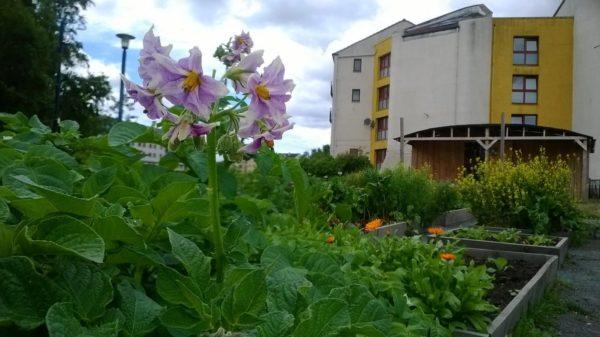 clovie garden